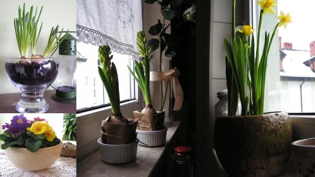 post szycie serduch i wiosna w domu i brunoszka_28.014