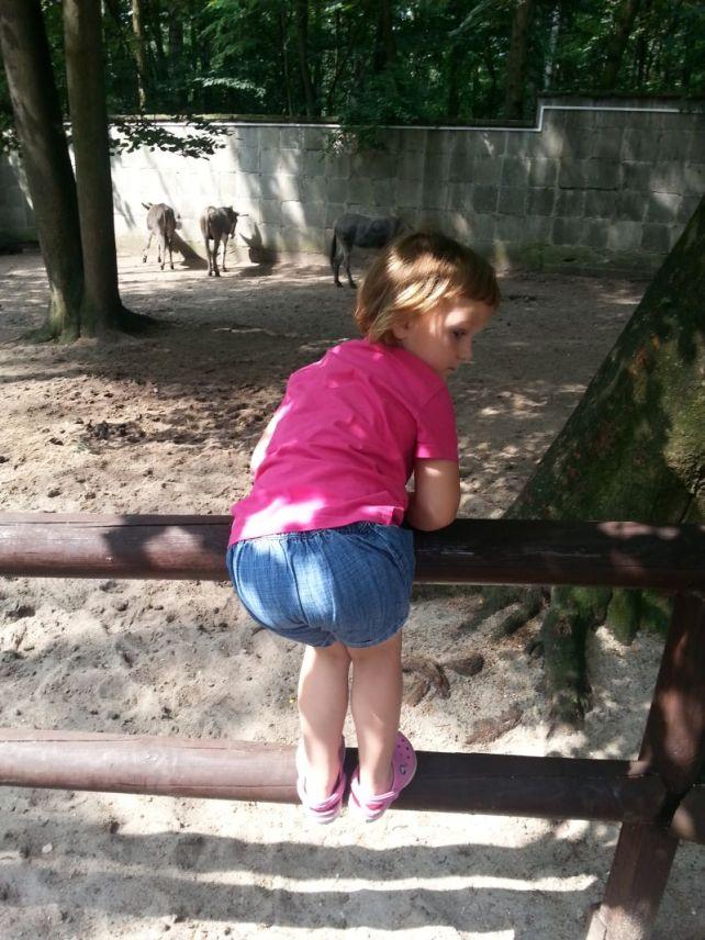 do postu Zoo4