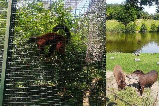 zdjęcia zoo babcia Krysia itp_Monika lipiec 2017_do postu_SMALL